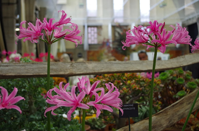 blog-ogrodniczy