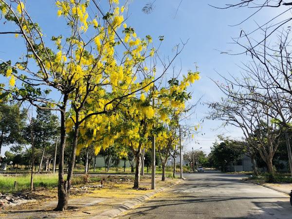 hoa nở ven đường tại dự án lợi bình nhơn