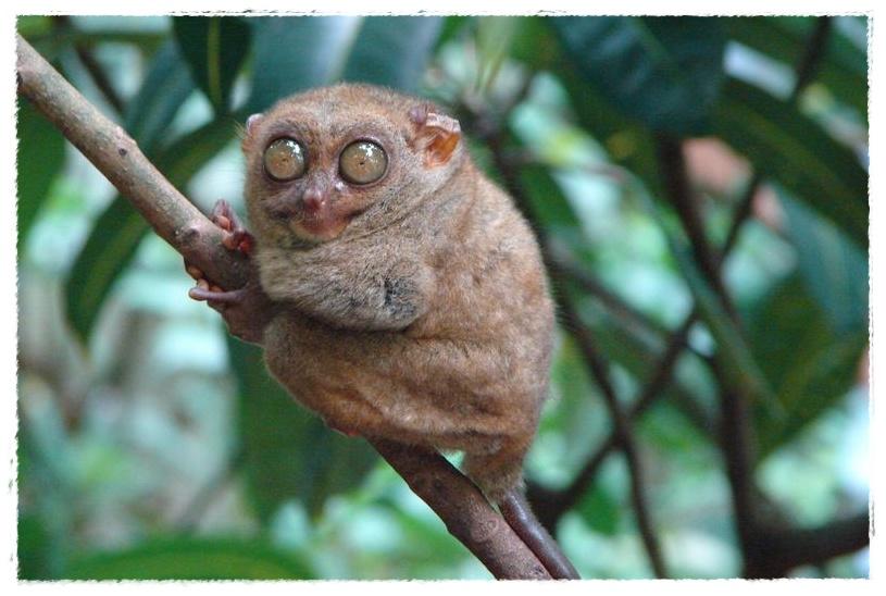 Gambar Hewan Yang Aktivitasnya Malam Hari Dunia Binatang