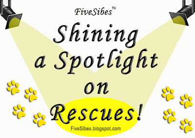 Pet Rescue Blog Hop