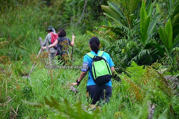 Bario Trekking