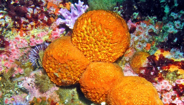 Sea Sponges - loài động vật phổ biến và sở hữu số lượng lớn tại S.E.A Aquarium