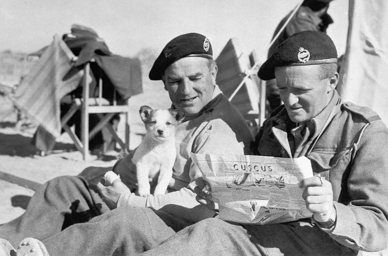 Two British tank officers, somewhere in the North African War Zone, on January 28, 1941, grin at war cartoons in an Italian newspaper. One holds a Mascot - a puppy found during the capture of Sidi Barrani, one of the first Italian bases to fall in the African War.