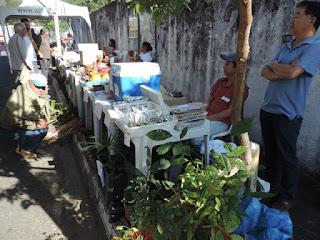 Sistemas Agroflorestais e Sustentabilidade no Vale do Ribeira