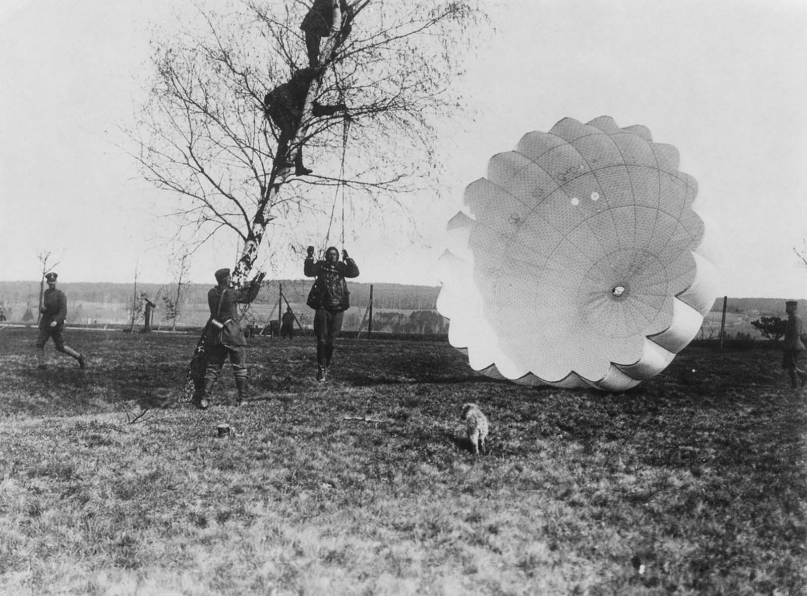 An observer is disentangled from a tree after parachuting from his balloon. 1918.