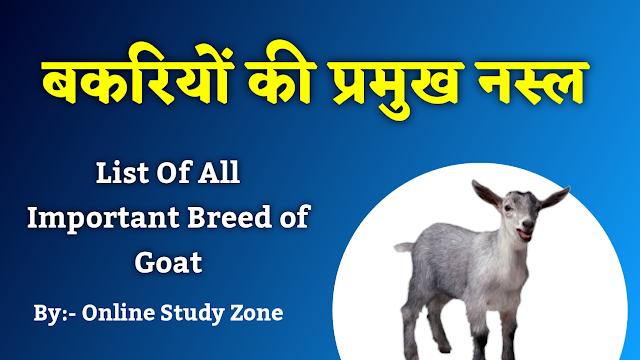 बकरी की प्रमुख नस्ल | Important Breed Of Goat