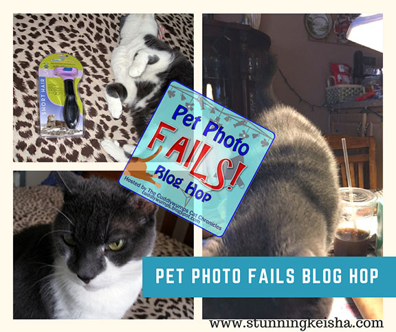 June Photo Fails & Fireworks Fill-Ins