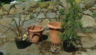 pots for terrace