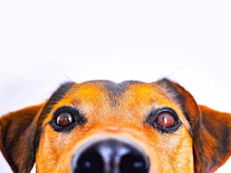 'Pet influencers': Brasil é 2º que mais consome conteúdo pet no mundo