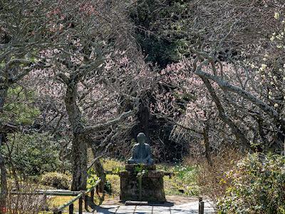 Spring garden: Tokei-ji