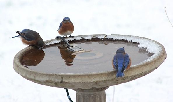Wild Birds Unlimited Electric Bird Bath Heater With A