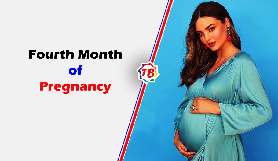 Fourth month of pregnancy
