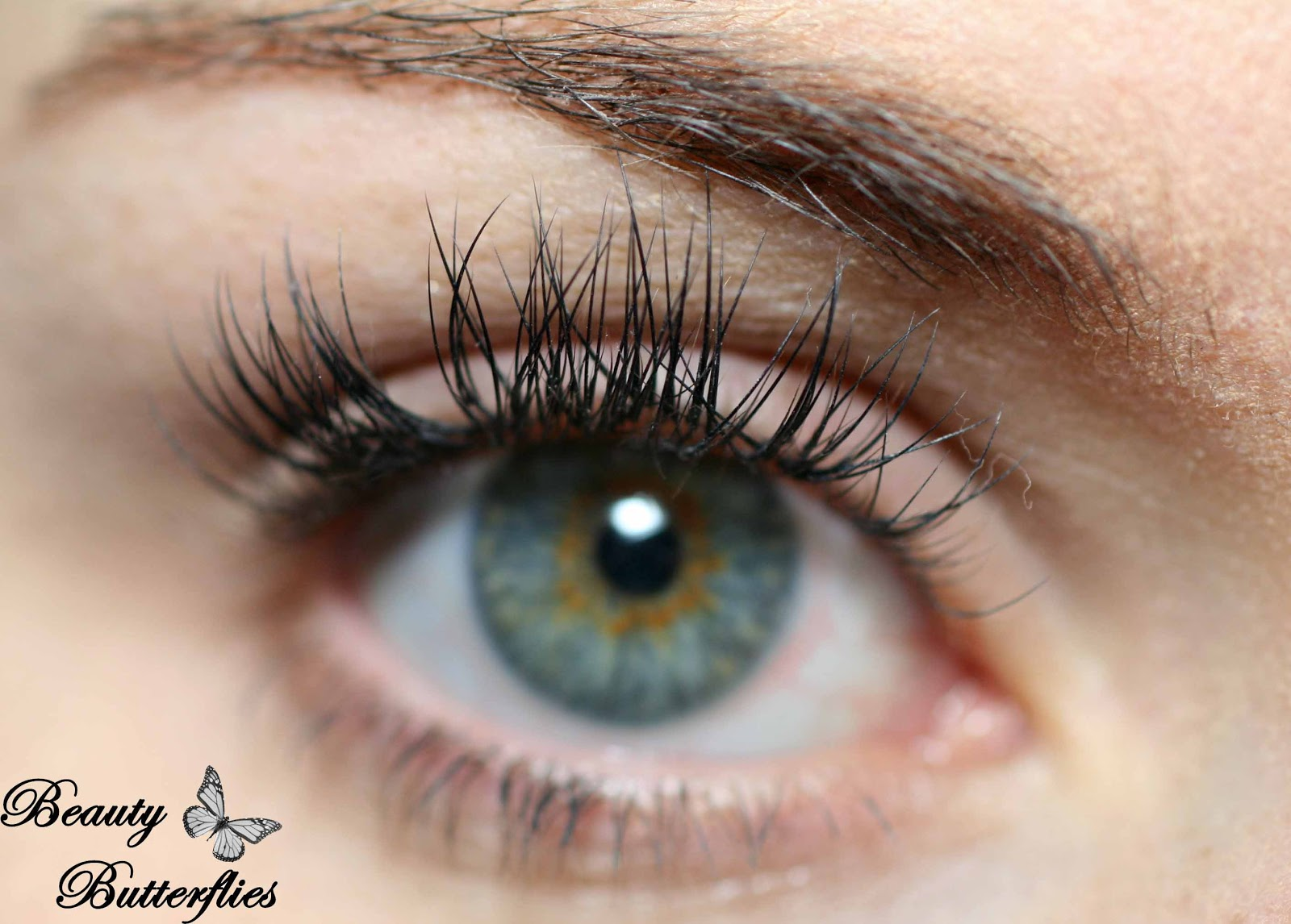 [Update] LUXUS LASHES
