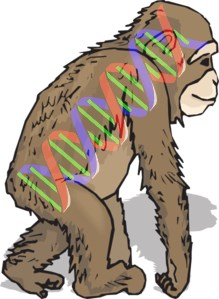 That human-chimpanzee genome similarity claim of evolutionists is getting shaken out of the tree by creation science.