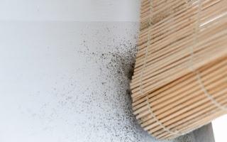 Ποια συμπτώματα πυροδοτεί η μούχλα στο σπίτι