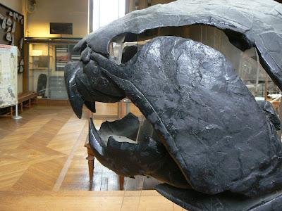 Cráneo fósil de Dunkleosteus