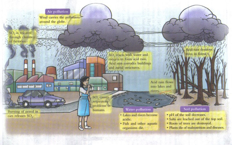 an overview of the issue of acid rain a type of air pollution Acid rain •coal-burning factories, cars, & trucks release chemicals that pollute the air •the pollutants mix with water molecules in clouds and turn the water acidic.