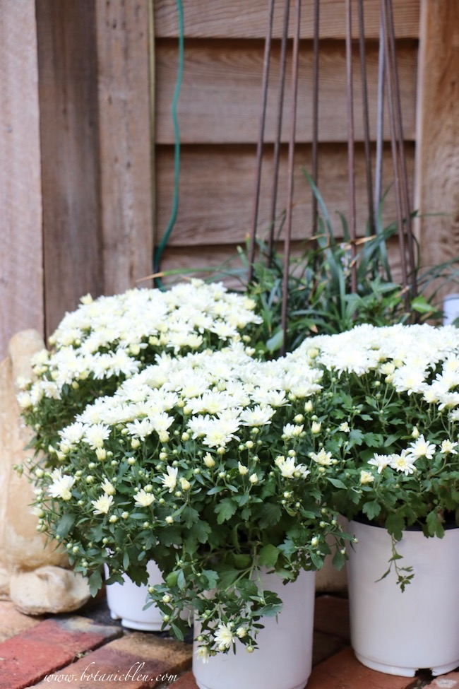 Fall Front Porch With White Chrysanthemums