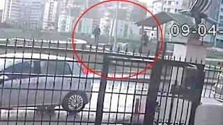 محكمة تركية تحكم على ثلاثة بتهمة قتل 16 كلباً في أنقرة (فيديو)