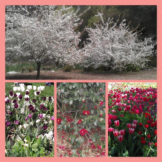 Descanso Gardens Collage