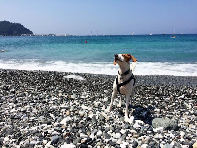 Sestri Levante, wycieczka z psem nad Morze Liguryjskie