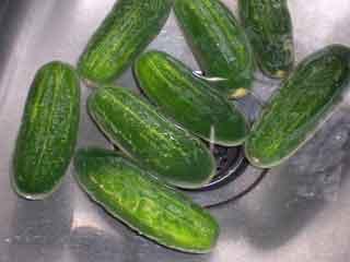 Go soak a pickle