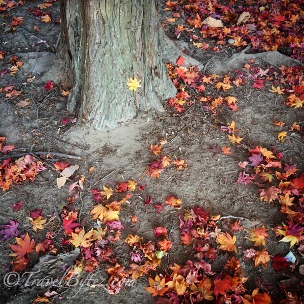 Nami Island Autumn Photos