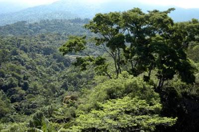 O que são Unidades de Conservação?