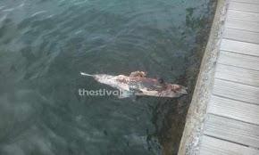 nekro-delfini-sti-nea-paralia-tis-thessalonikis