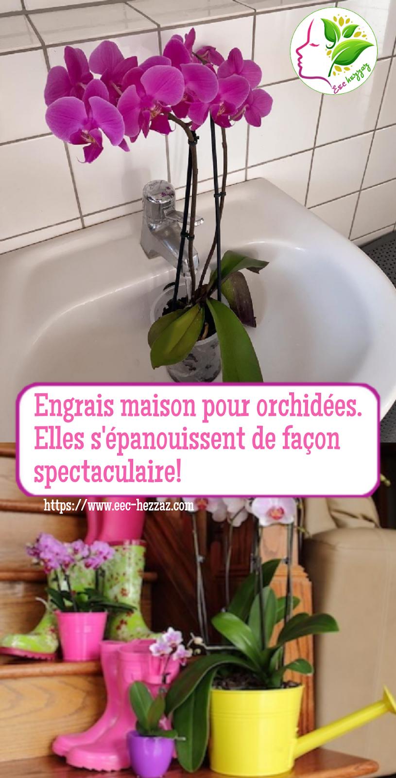Engrais maison pour orchidées. Elles s'épanouissent de façon spectaculaire!