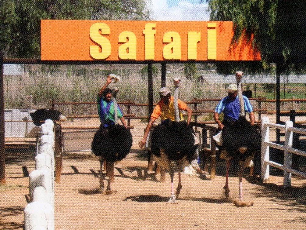 fazenda de avestruz na África do Sul