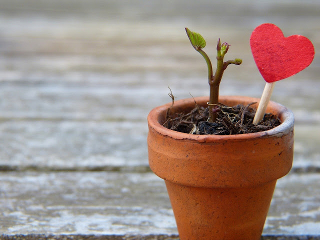 Vaso, cuore pianta