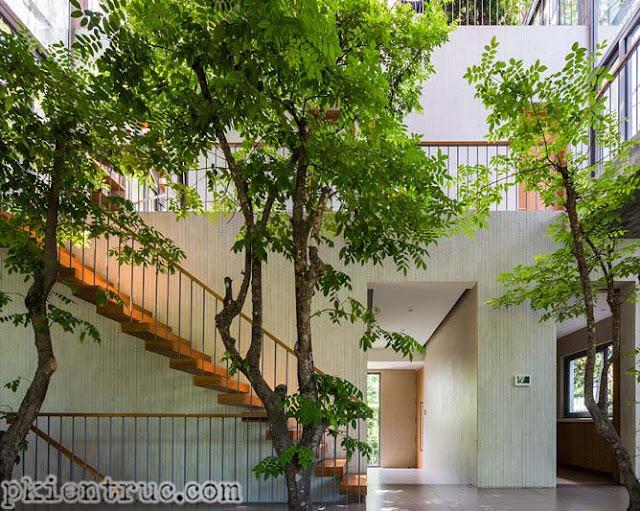 cây khế trồng xanh tốt trong nhà