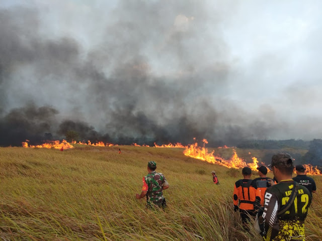 Diduga Akibat Puntung Rokok, 100 Hektar Padang Ilalang di Suoh Terbakar