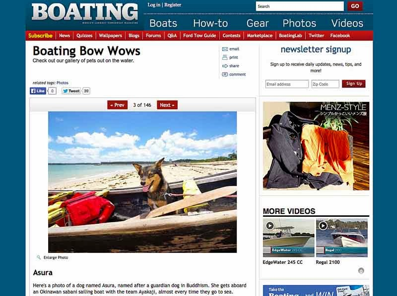 online boating magazine,dog in sailing sabani boat