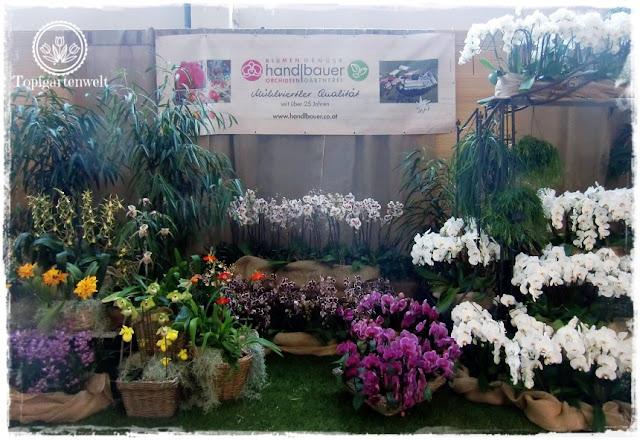 Gartenblog Topfgartenwelt Gartenmesse Blühendes Österreich 2017: Orchideen