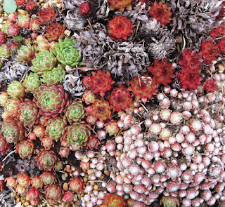Tiny succulent plants in a pot viewed from above