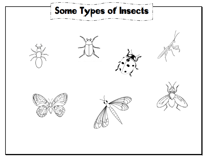 What Is Insect Notebooking Pages