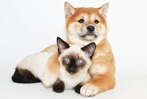 Quais medicamentos são proibidos para cães e gatos