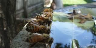 Πώς μπορώ να απομακρύνω τις μέλισσες από μια πηγή νερού π.χ. από τη βρύση του γείτονα;