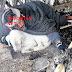 ΝΤΡΟΠΗ! Άφησαν στο κρύο και την παγωνιά τον άστεγο με τα σκυλιά στον Πειραιά (FOTO REPORTAZ NET)