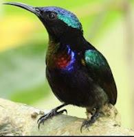 bentuk kaki kolibri