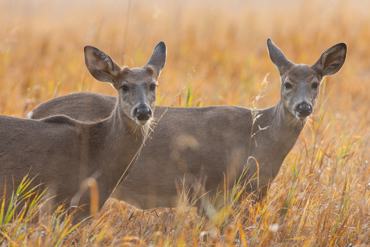top 22 most beatiful beautiful deer wallpapers in hd