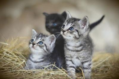 Mencegah kucing stres