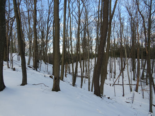 wooded sand dunes in winter