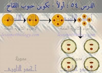 تكوين حبوب اللقاح فى النباتات الزهرية