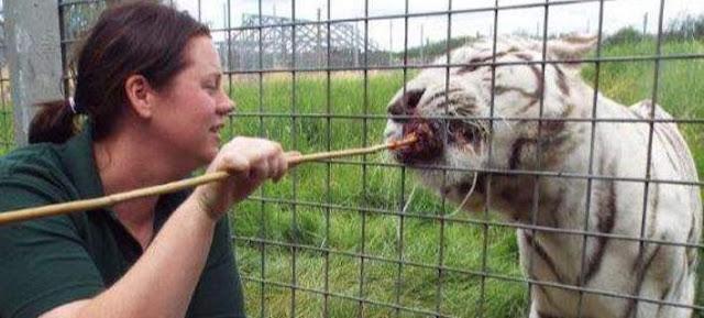 Τραγωδία σε ζωολογικό κήπο στη Βρετανία: Τίγρης κατασπάραξε υπάλληλο