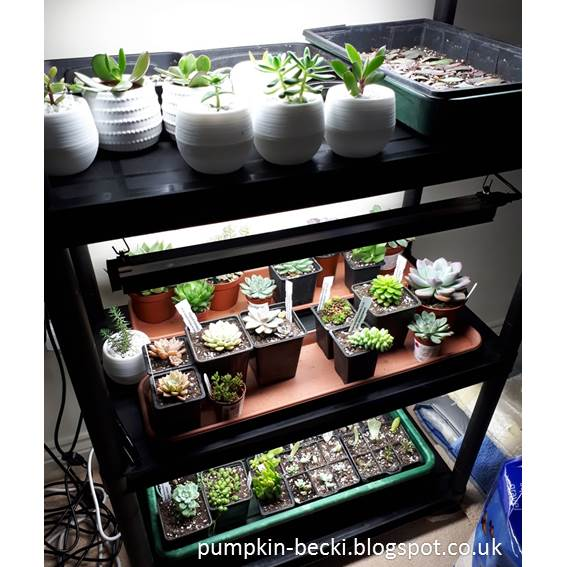 Succulents Grow Lights installed shelving system