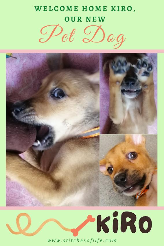 Kiro, Our Pet Dog