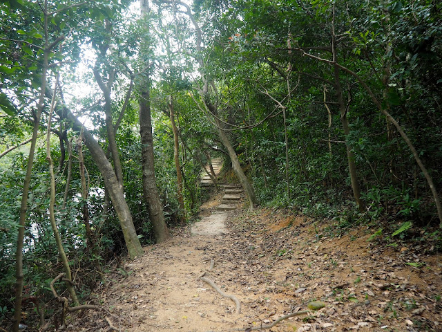 Trail through the forest on Monkey Mountain hike, New Territories, Hong Kong
